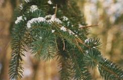 treeblog