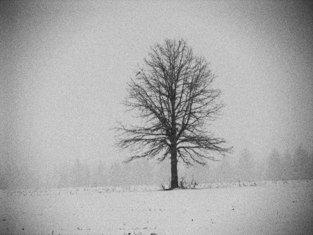 treeinfieldblog