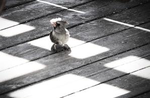 birdonbalconyblog