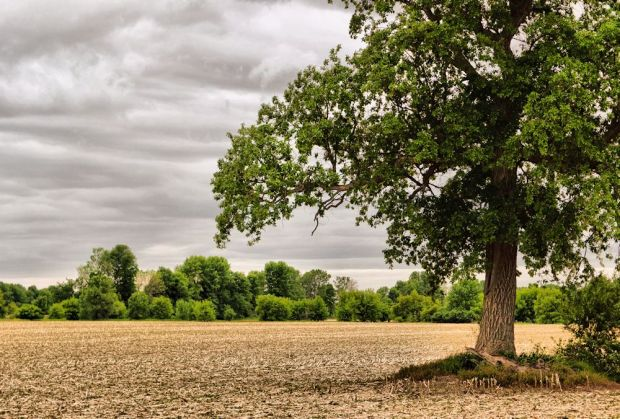 fieldtreeblog