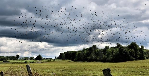 birdsinafieldblog