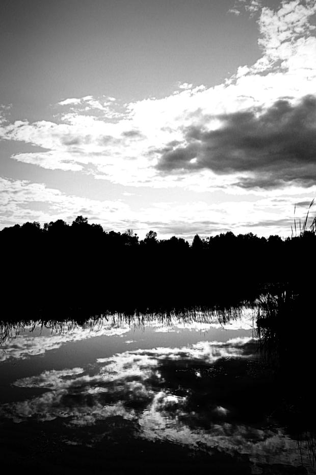 silhouetteblog