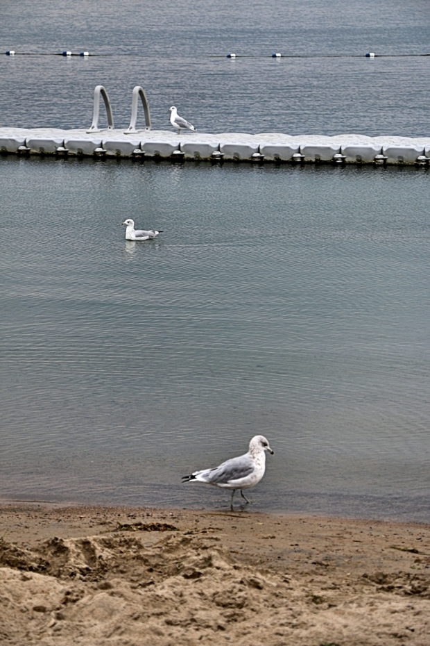 Threebirdsblog